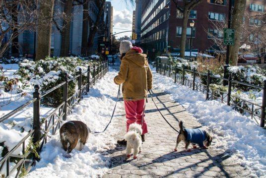 dog-walker-hustle